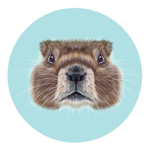 marmotcircle