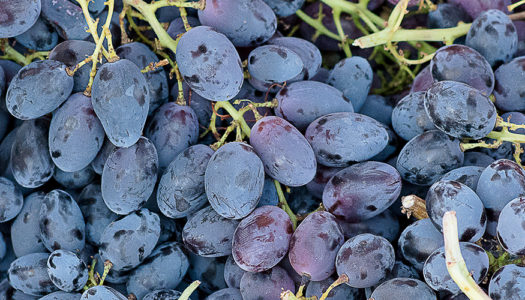 From Wine to Wine Grapes