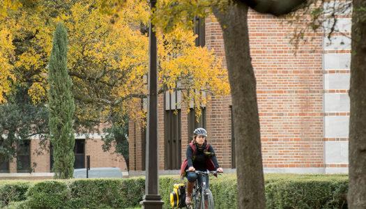 Campus Scene: Wise Trees