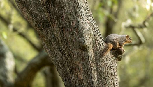 Campus Scene: Squirrel Watch