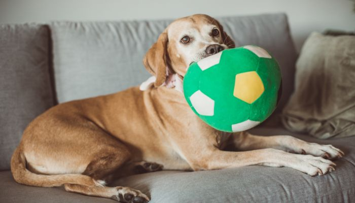 Pet Care Franchise Opportunity