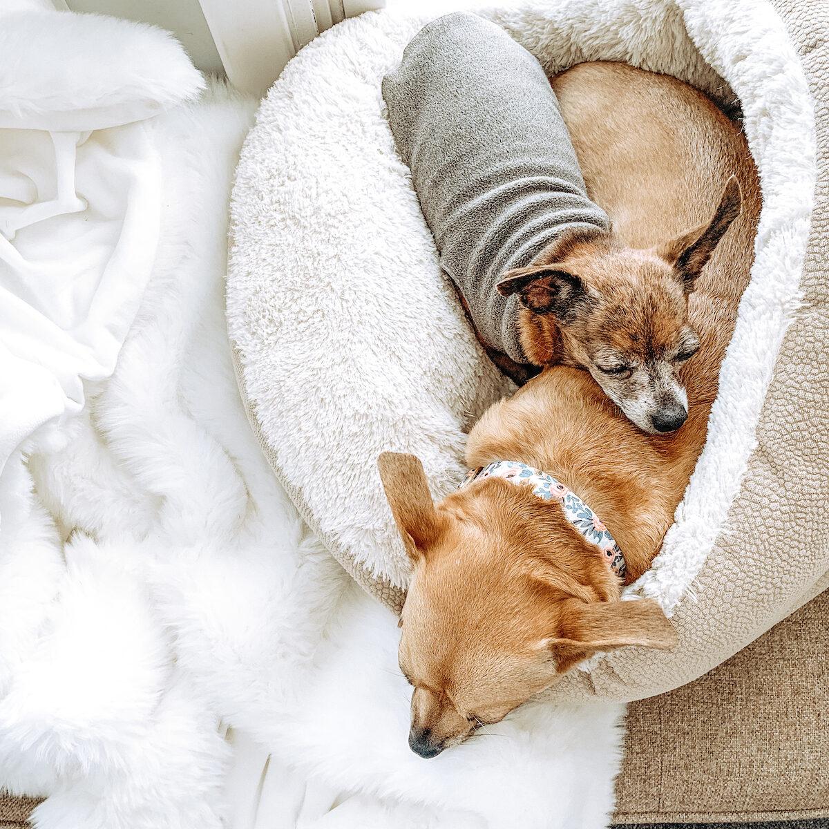 Pecan Pie Puppies Collar Dog Mom Guide