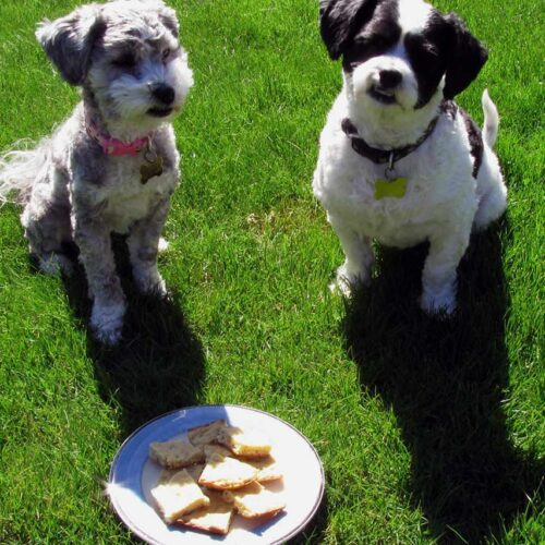 Recipe Photo Cookies for Dogs