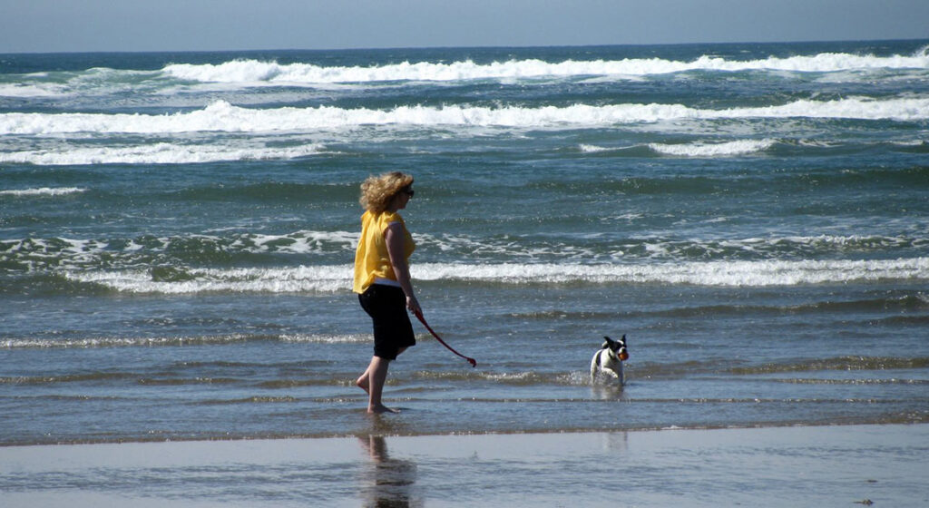 Dog Swimming in the Ocean