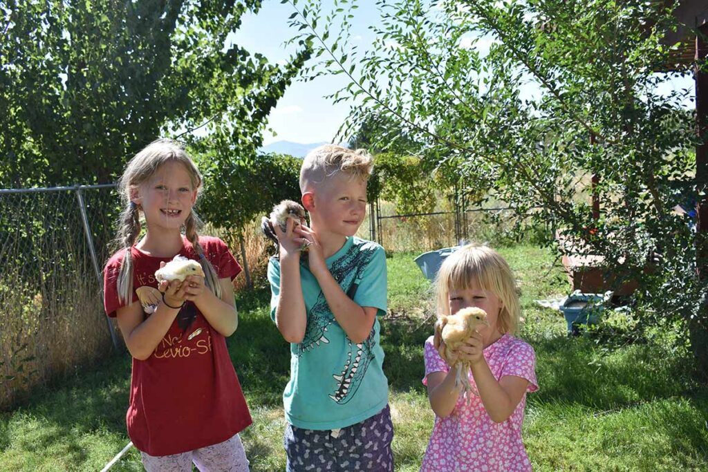 baby chickens and kids