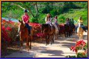 caribbean-world-horseback-riding-2