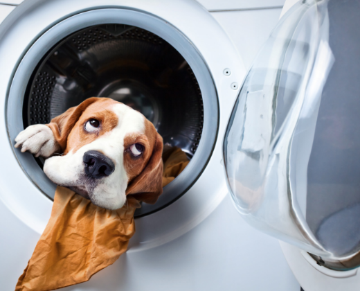 appliance savings are illustrated by photo of dog in dryer with a towel in its mouth