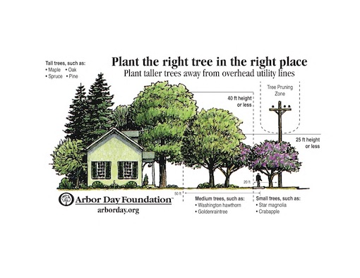 This is a drawing of the arbor day tree guide and illustrates the types of trees that can be planted and the proximity to utility lines. Under or near the lines, trees can not be taller than 25 feet, 20 feet from the lines they must be less than 40 feet. Suggestions are Crabapple under the lines and Golden Rain Trees at 20 feet from the lines.