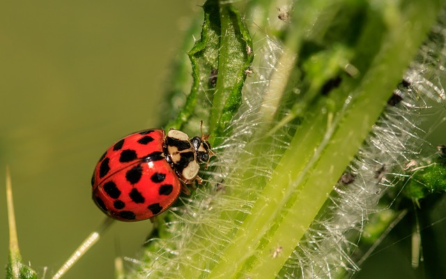 photo of a ladybug on a leaf. This is used on the website to illustrate a blog post that discusses bugs around your home or commercial property.