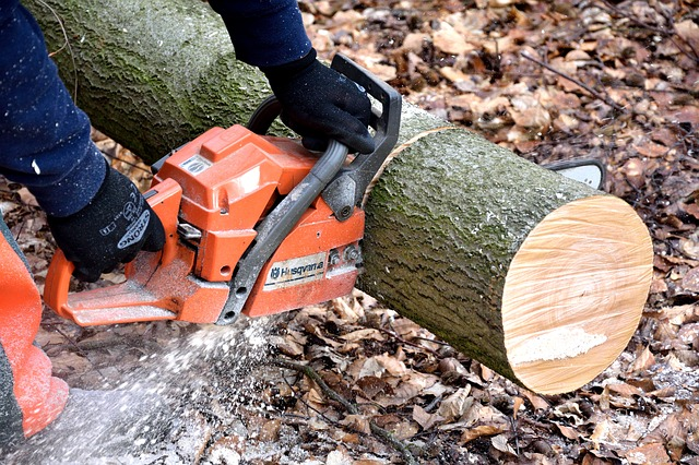 This is photo of someone holding a chain saw cutting a large limb illustrating tree removal and replacement as part of the Tri-County Electric vegetation program.