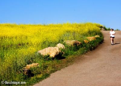 06 Ventura County Scenics