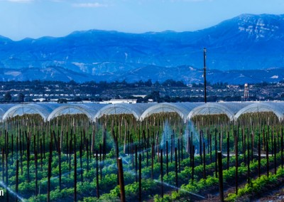 17 Crop irrigation_Panorama1