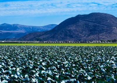18 Cabbage mountains panorama