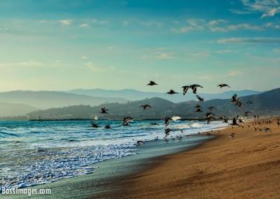 37 Ventura Harbor beach