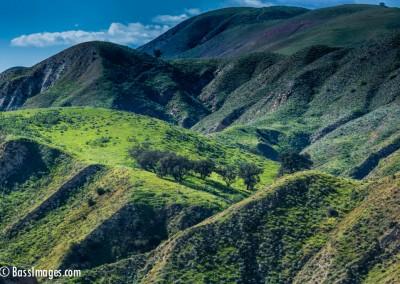 Grimes Canyon Trees