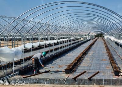 Farm worker preps shade
