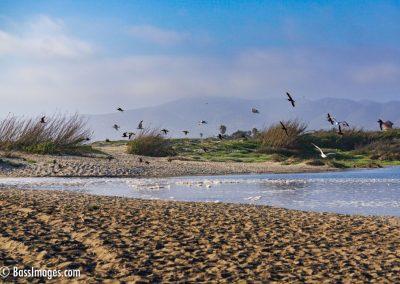 Ventura beach by lagoon-7