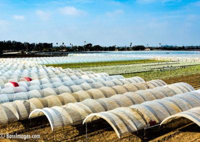 Oxnard shaded crops 121316-3