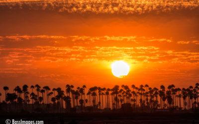 Sunset framed by Palms