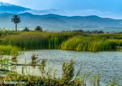 Ventura River estuary-1