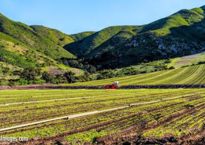 Camarillo hillside farm-1