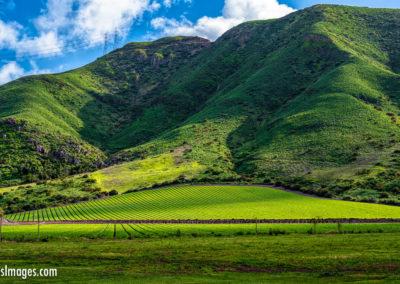 Camarillo crop rows mountains-1