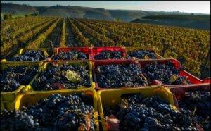 Bella Bacinos in Downtown La Grange Hosts Wine Event February 23 Featuring Vintner Mario Bisceglia