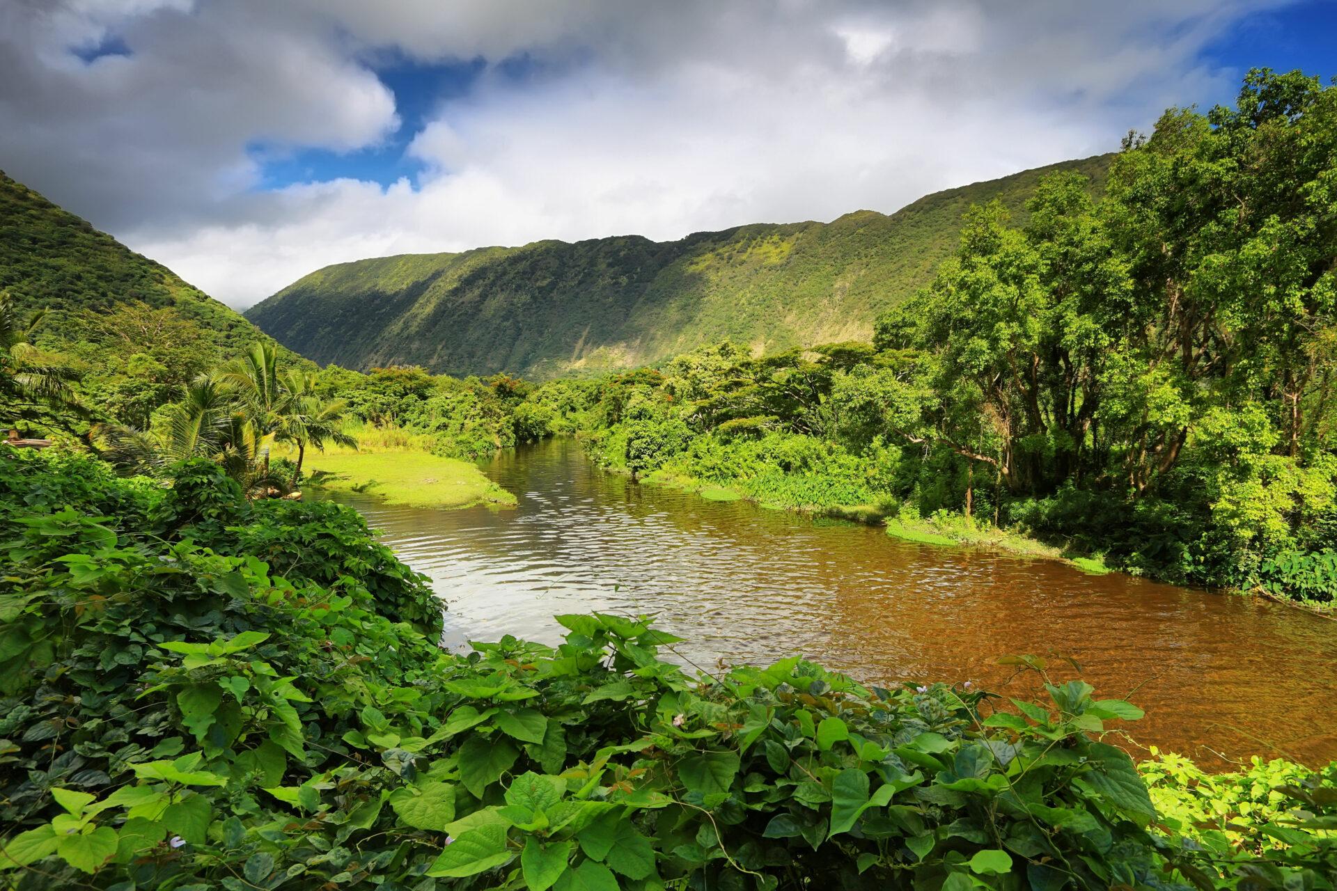 26225223 - view of the river in waipio valley, big island, hawaii