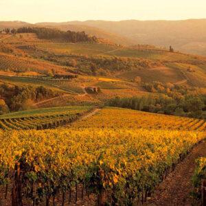 Tuscany-Montalcino