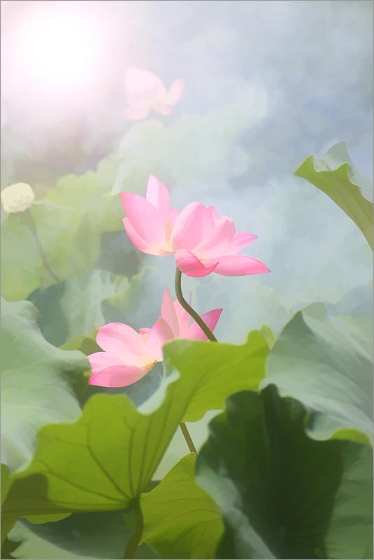 Lotus in yoga is symbol of rebirth