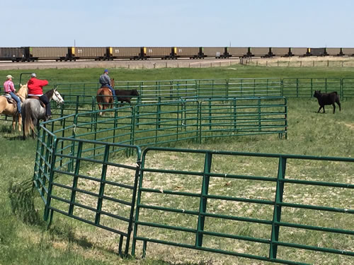 Experiencing ranch life at Our Heritage Ranch