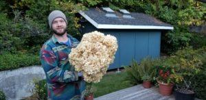 Adam with Cauliflower mushroom (sparassis radicata).