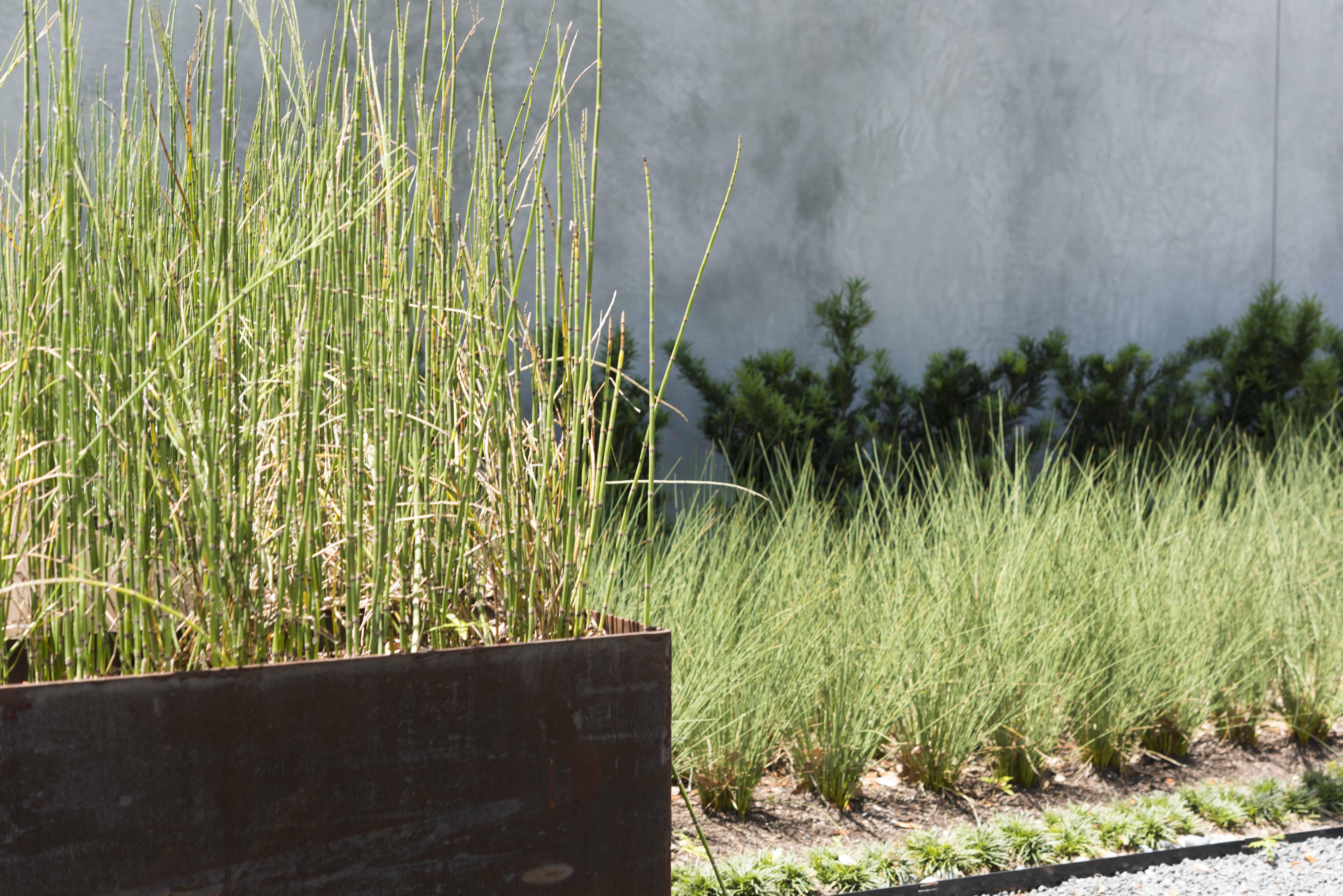 university boulevard modern home family lifestyle facade corten planter