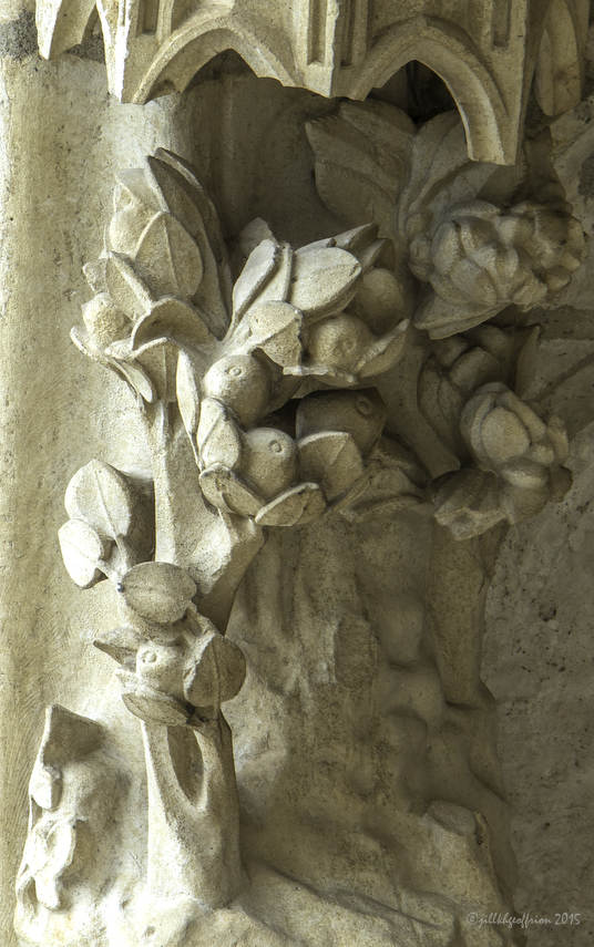 Plants in the garden of Eden at Chartres Cathedral by photographer Jill K H Geoffrion