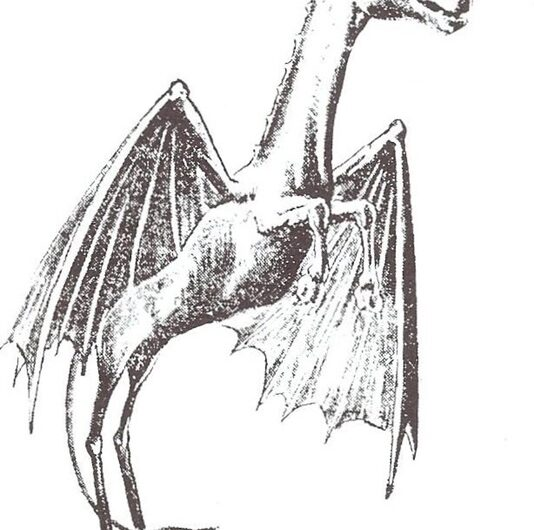 The Finest Horse/Bat/Kangaroo Monster America Has to Offer