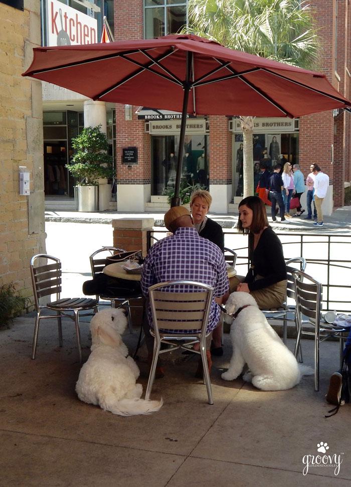 CHARLESTON SC LOVES DOGS