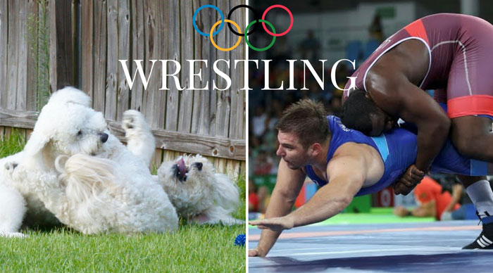GOLDENDOODLE OLYMPIC GAMES