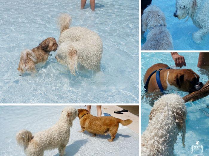 DOGS RULED SPLASH ISLAND WATERPARK