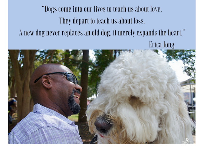 lessons-from-dogs