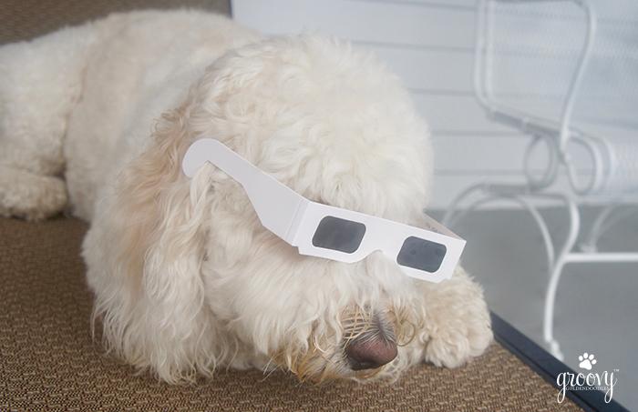 SOLAR ECLIPSE PET PROTECTION