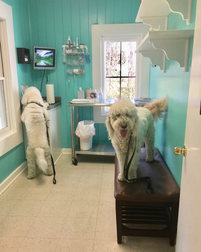 NOT ALL PET INSURANCE IS THE SAME