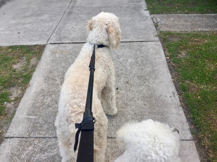 WACKY WALK'R NO PULL LEASH TRIO