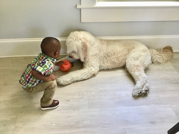 Dogs and children should be properly introduced and supervised.