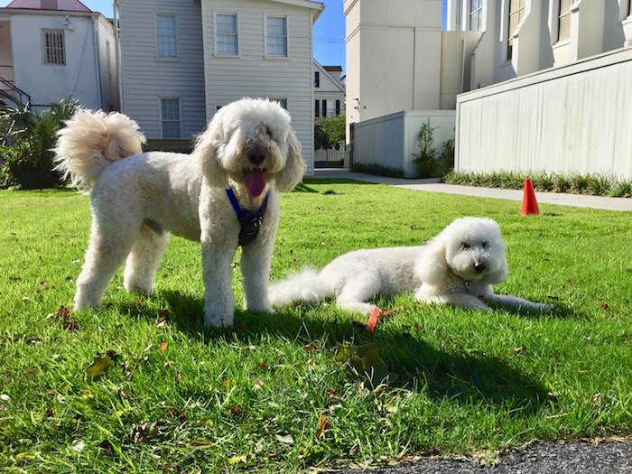 With cooler weather - the Boys are able too enjoy the outdoors. More Doodle romps and fresh air make for happier and hungrier Boys. So why not try and make some Ollie Dog Food treats to have on hand.