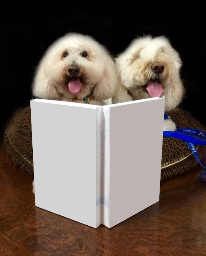 These two here - inspired me to pitch PAWsome Story Time to hospital administration. Dogs + a Story + Illustrations (anytime you want)? = PRICELESS