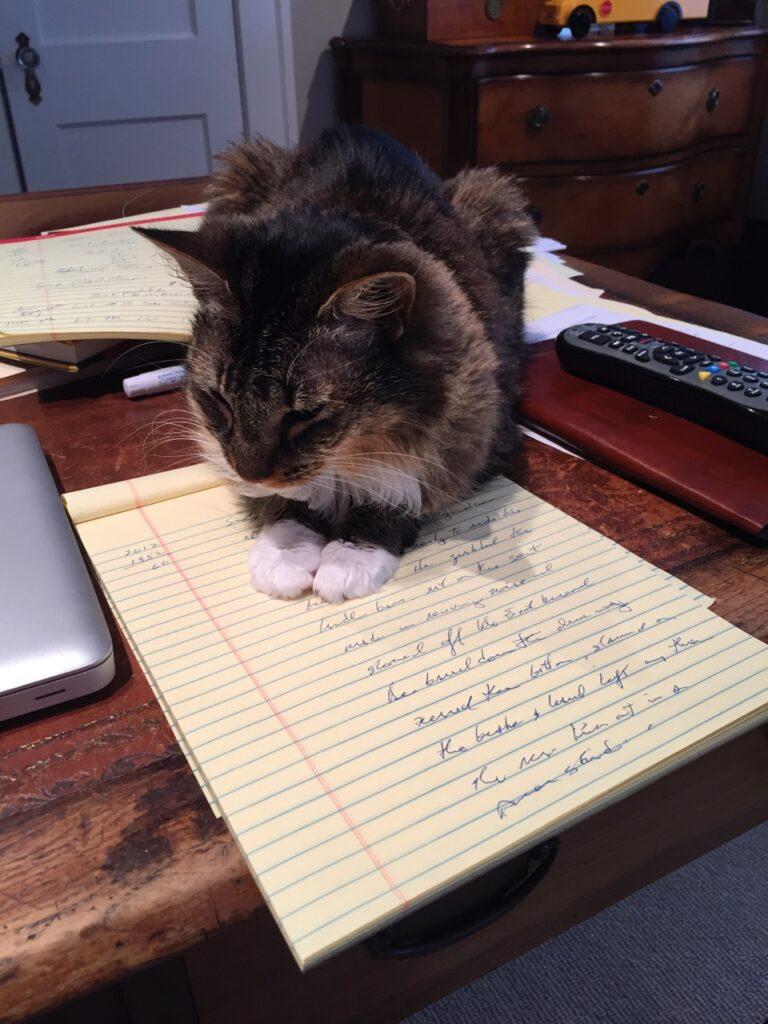 "Petunia the cat edits first draft of ""Road Trip."""