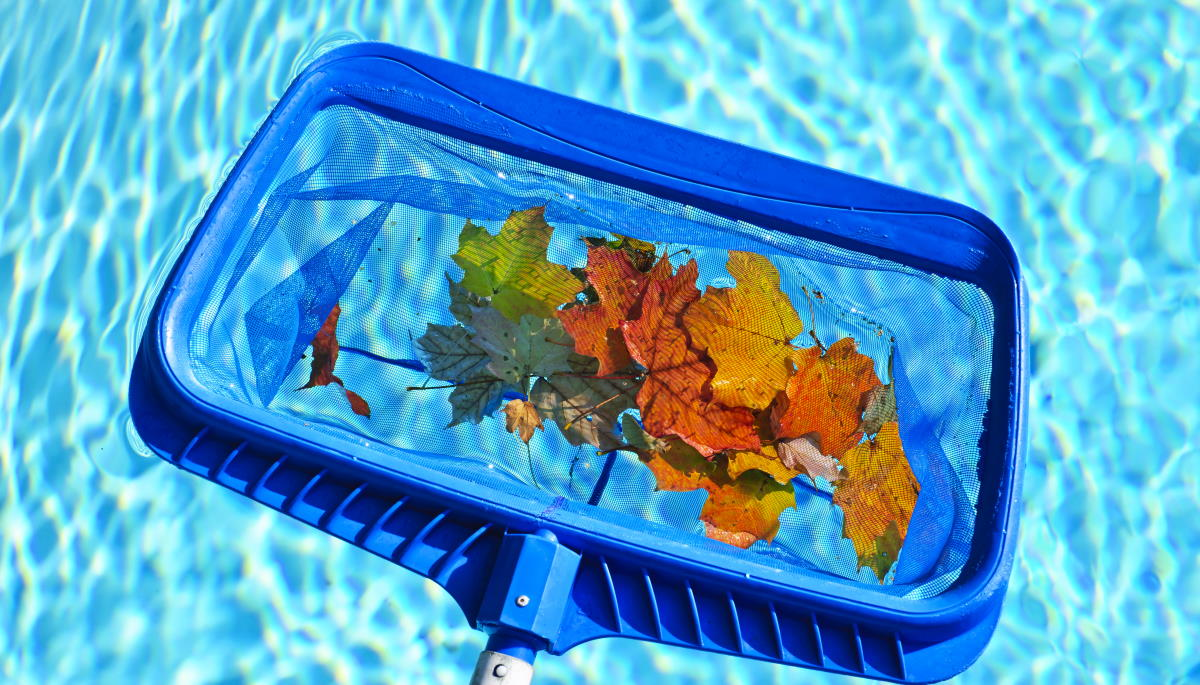 Cleaning swimming pool of fall leaves with blue skimmer before closing