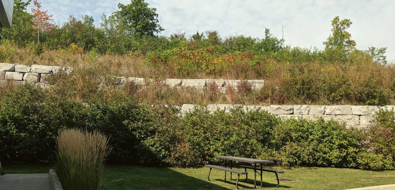 The view out back: A picnic table is set against a backdrop of green.