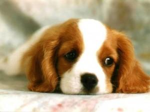 bb-code-for-forums-url-http-www-imagesbuddy-com-cute-little-dog