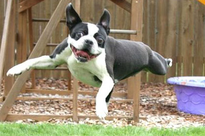 funny dogs compilation videos